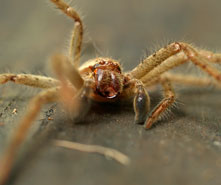 6 Creepy-Crawly Careers